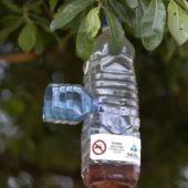 Reparto de atrayente para trampeo de avispa asiática