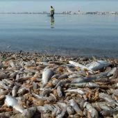 Mortandad de peces en el Mar Menor