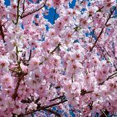 La primavera astronómica entrará este sábado a las 10:37