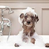 Ángel Osuna, adiestrador canino, nos habla del baño de nuestros perros y nos ofrece sus consejos