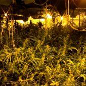 La Guardia Civil desmantela dos plantaciones de marihuana en Santa Olalla y detiene a 5 personas.