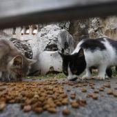 Unidas Podemos propone un programa de control felino y nombrar una rotonda de Badajoz como rotonda 25 de Marzo