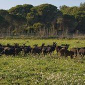 """El sector ganadero continúa """"en preocupante descenso"""" según el Observatorio de Sostenibilidad de Ibiza"""