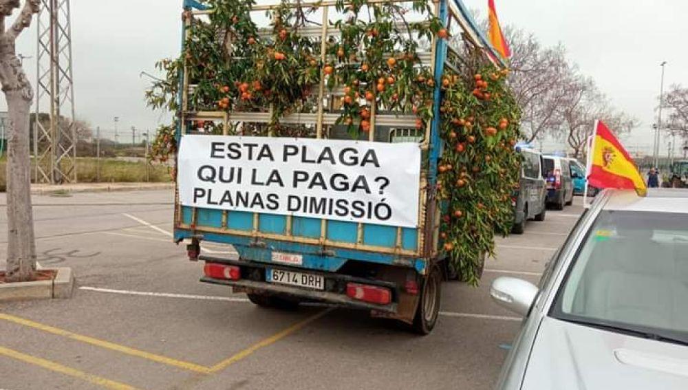 Agricultores de Castellón piden en el Senado soluciones al cotonet