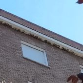 Destruyen cerca de un centenar de nidos de avión común