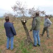 Manuel Torrero visitando algunas parcelas de olivar afectadas en la Alcarria de Cuenca