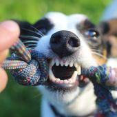 Boca de perro