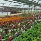 Más de 43.000 flores para embellecer los pueblos de Cáceres