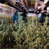 Agentes de la Guardia Civil en la plantación de marihuana de Crevillent.