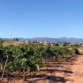Viñas riojanas en Alesón