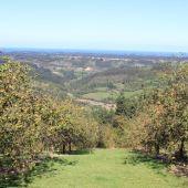 Manzanos en la Comarca de la Sidra