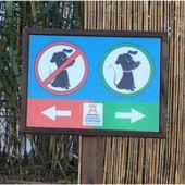 Arranca en Ibiza una campaña de vigilancia de tenencia y protección de animales.