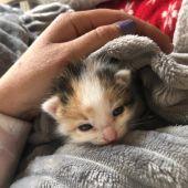 Uno de los gatos rescatados en el instituto de Azuaga
