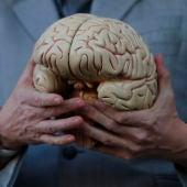 ¿Qué sabemos del cerebro?