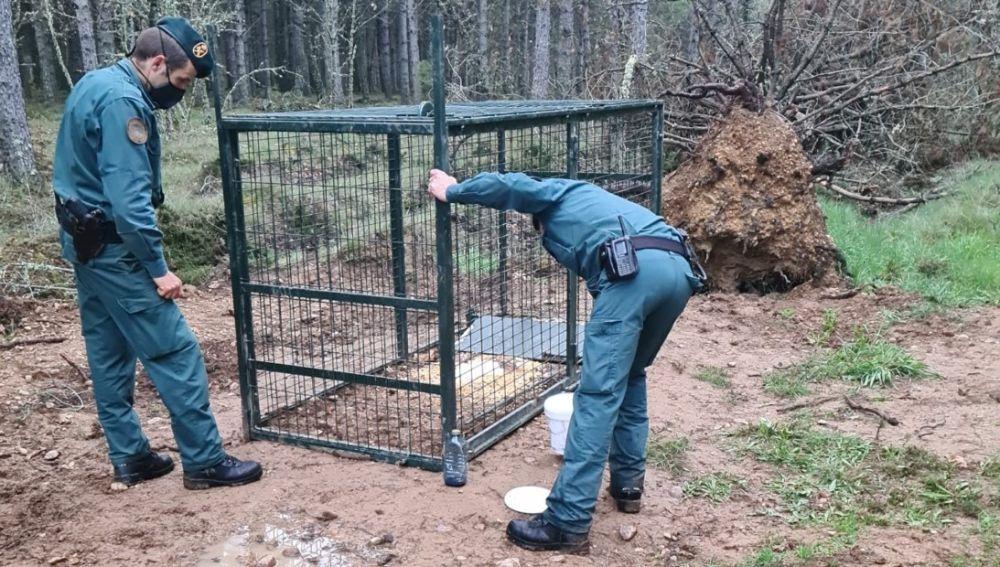 Investigan a una persona por colocar una jaula trampa en Villarrabé