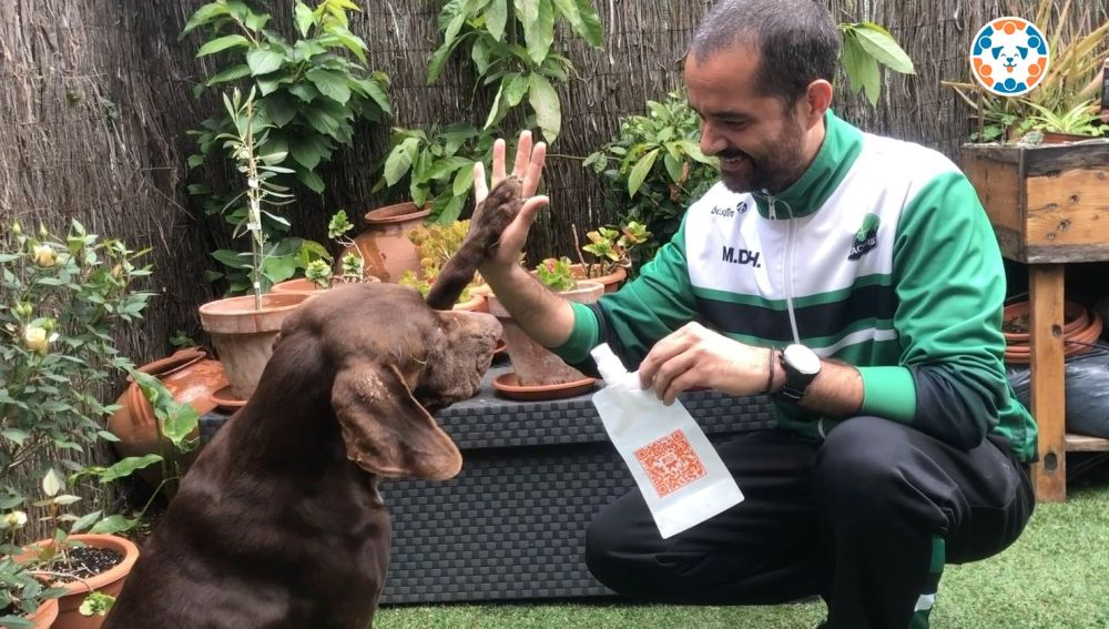 Cáceres lanza una campaña sobre la obligación de limpiar la orina de los perros ante la nueva ordenanza municipal