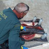 Guardia Civil incauta atún pescado ilegalmente