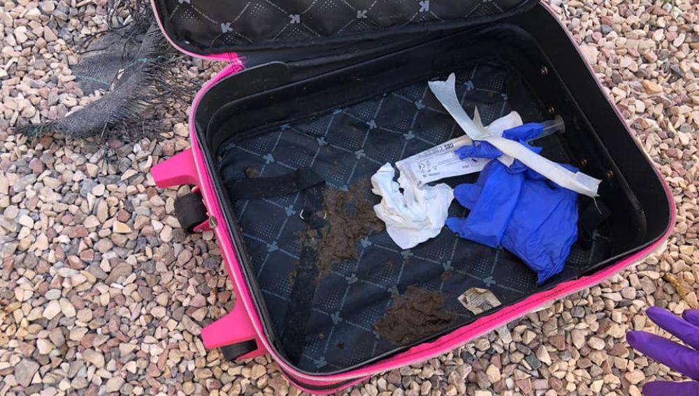 Interior de la maleta donde fueron encontrados los gatitos