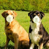 El test para mascotas puede ser utilizado en el punto de atención (Point-of-Care) sin necesidad de disponer de un laboratorio.