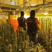 Detenidos cinco miembros de un grupo responsable de dos plantaciones de marihuana en Badajoz y La Codosera