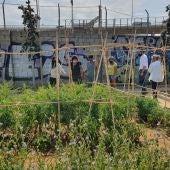 El huerto urbano que gestiona esta asociación, en Cádiz