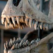 Quin impacte va tenir en la societat de l'època el descobriment dels dinosaures?