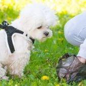 Ciudad Real suspende a la hora de combatir excrementos caninos en sus calles