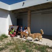 En el refugio de animales hay en estos momentos catorce perros y dos gatos