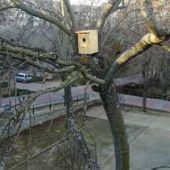 Una de las cajas nido para murciélagos instaladas por el Ayuntamiento de Aspe.