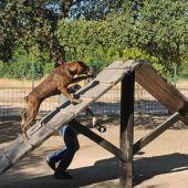 Imagen de archivo de actividades con mascotas en el Parque del Alamillo