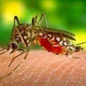 Lucha contra los mosquitos en un año de incidencia alta