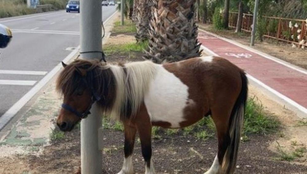 El poni en el lugar del rescate por parte de la Policía Local de Alicante