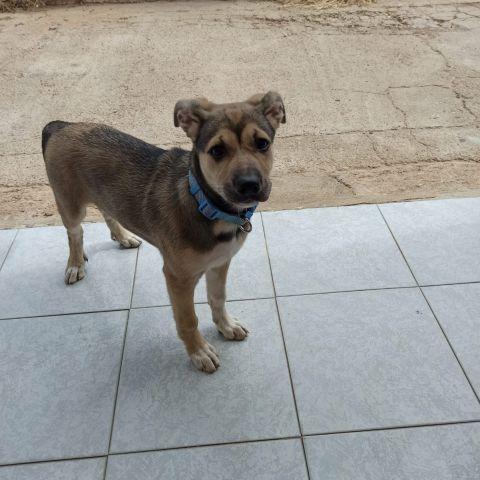 Mika, la perra atropellada en Castellón