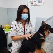 Veterinaria con un perro en la clínica 'Natural Mascotas' de Torrellano.