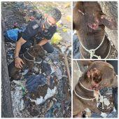 Rescatan a un perro arrojado vivo a una hoguera envuelto en una manta en Almería