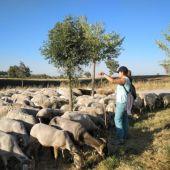 La Comunidad convoca ayudas para la prevención, control, lucha y erradicación de determinadas enfermedades animales