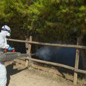 Ante la proliferación de mosquitos se inicia el plan especial de fumigación en el canal de María Cristina