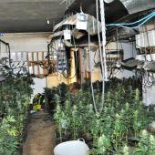 Cultivo ilegal de marihuana que localizó la Policía Nacional
