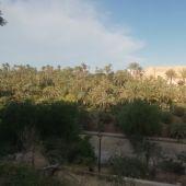 Vista del Palmeral y el Palacio de Altamira de Elche.