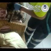 Captura de pantalla del vídeo del rescate del gato