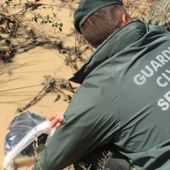Guardia Civil recogiendo al cisne asesinado en Ochando
