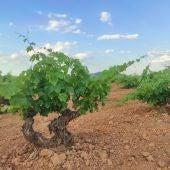 Viñas DO Valdepeñas