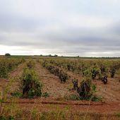 Viñas afectadas tras el paso de DANA por Cuenca