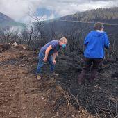 Técnicos forestales avalían as zonas afectadas polos incendios en Ribas de Sil