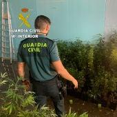 Dos detenidos por cultivo de marihuana en un polígono de Cuenca