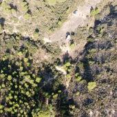 La plantación estaba oculta entre árboles