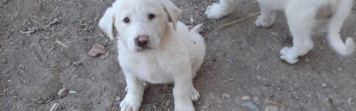 ¿Qué nombre debería ponerle 'Eduardo el pastor de Jerez' a su nueva cachorra?