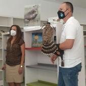 La biblioteca de Benejúzar habilita un espacio dedicado a las aves y la cetrería para conocer mejor esta actividad