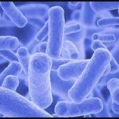 Tuberculosis caprina
