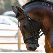 Imagen de archivo caballo